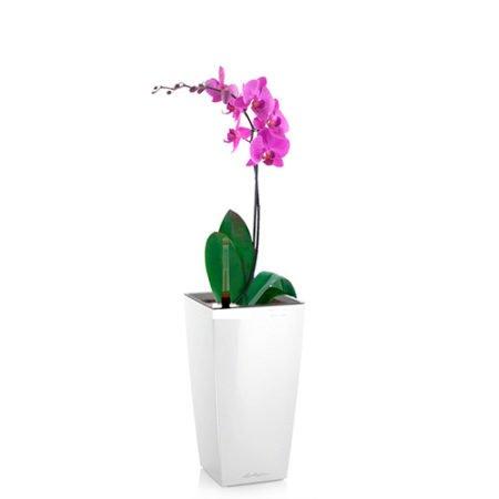 Орхидея фаленопсис + MAXI-CUBI белый блестящий