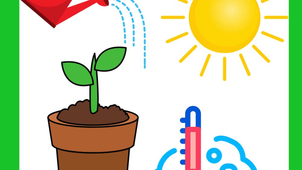 жизни комнатных растений 1000x565 - Факторы жизни комнатных растений