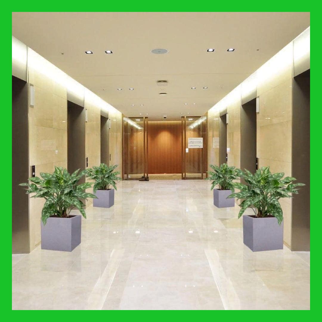 .png - Озеленение коммерческих помещений