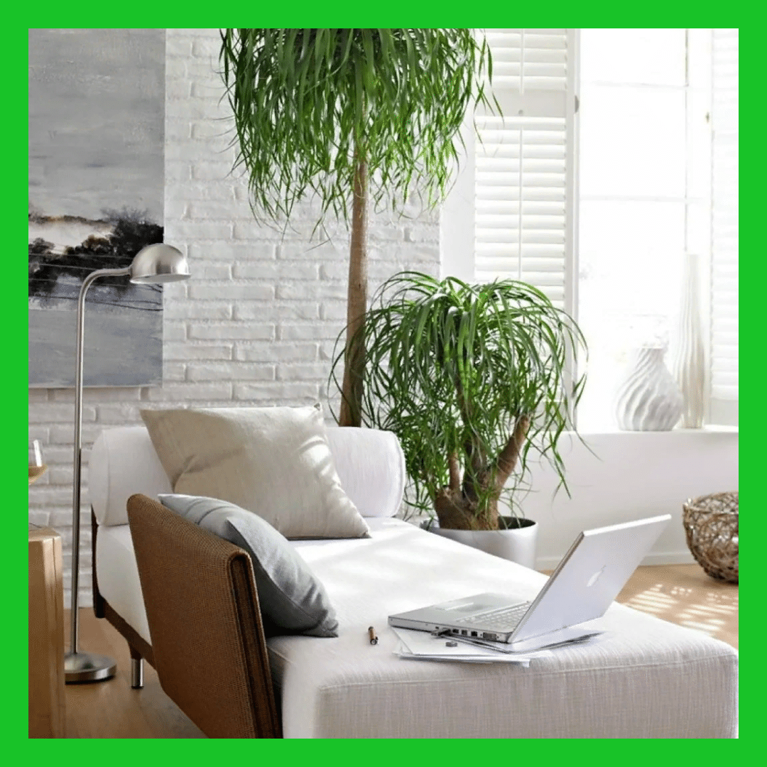 помещения - Озеленение под ключ