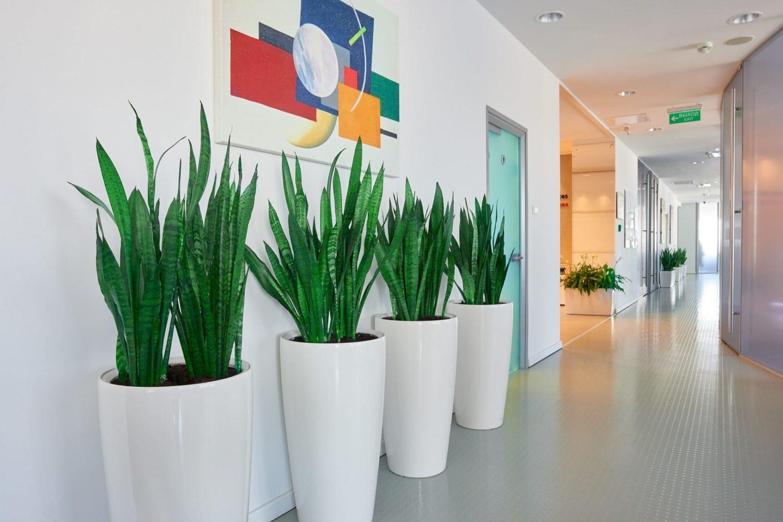 1536x1025 - Озеленение клиники