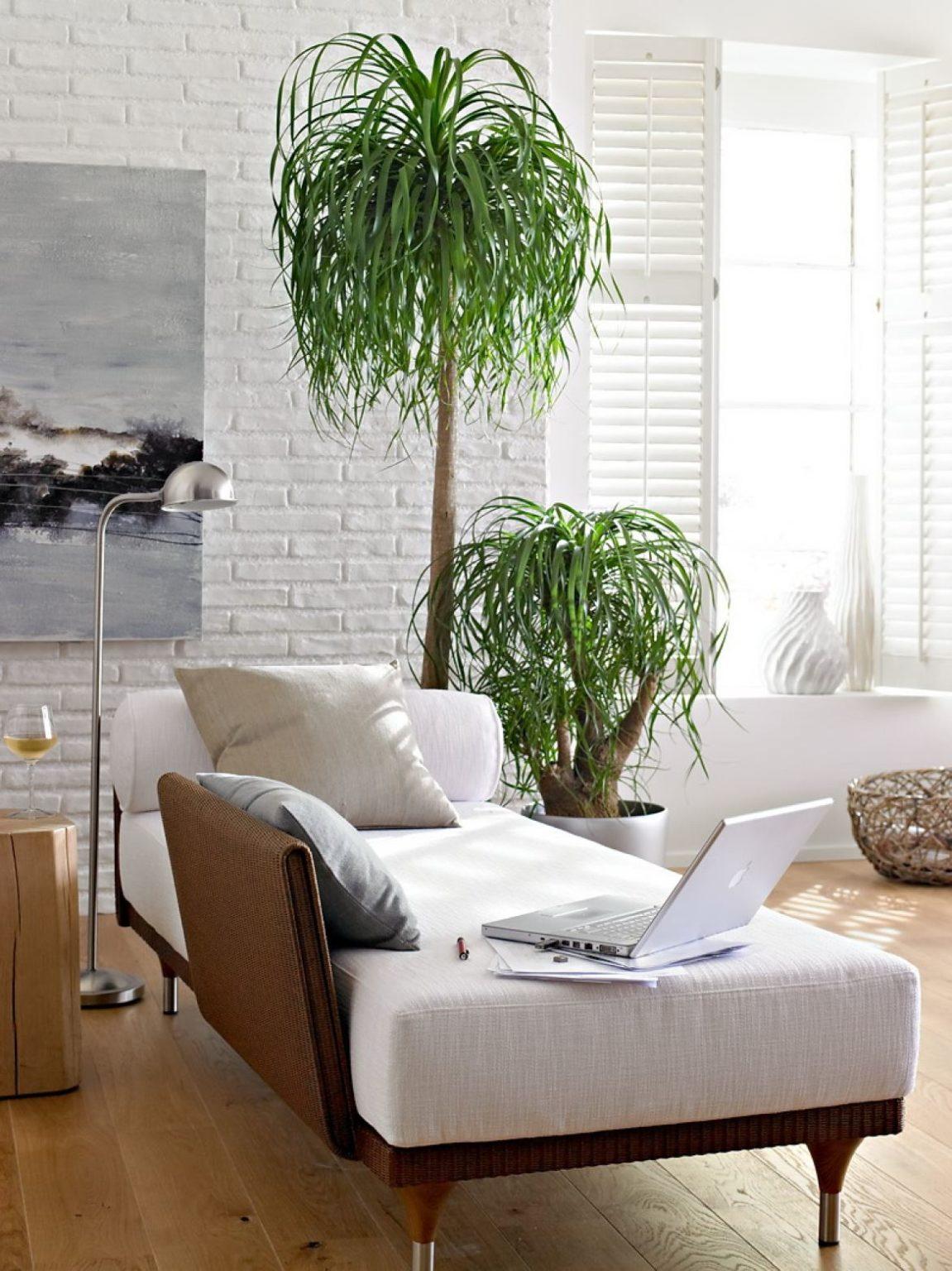 жилых помещений 1151x1536 - Озеленение жилых помещений